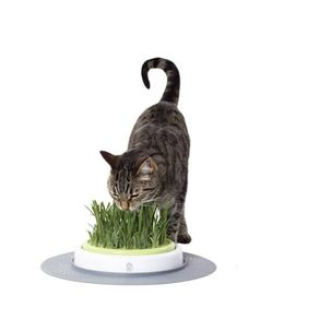 Cat_It_Senses_Jardin